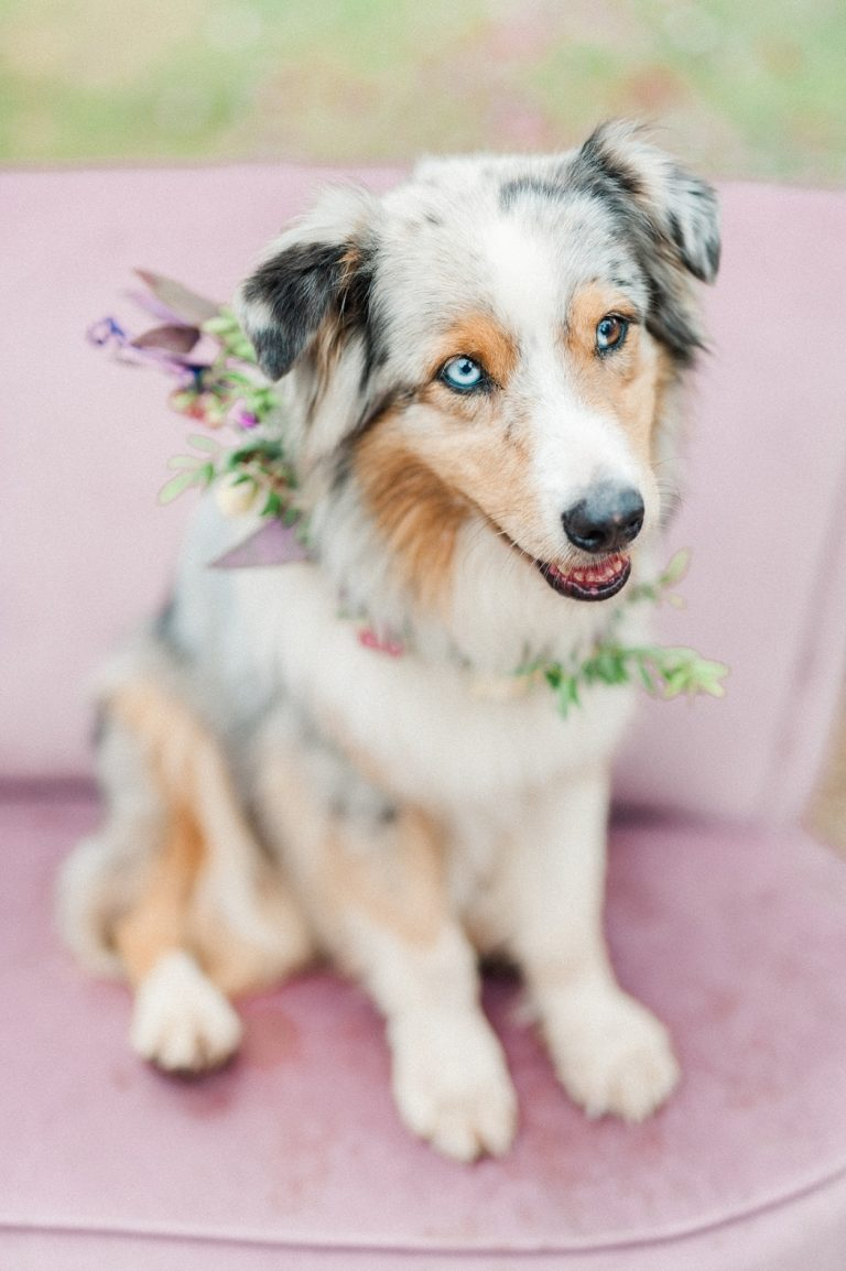 dog with floral garland