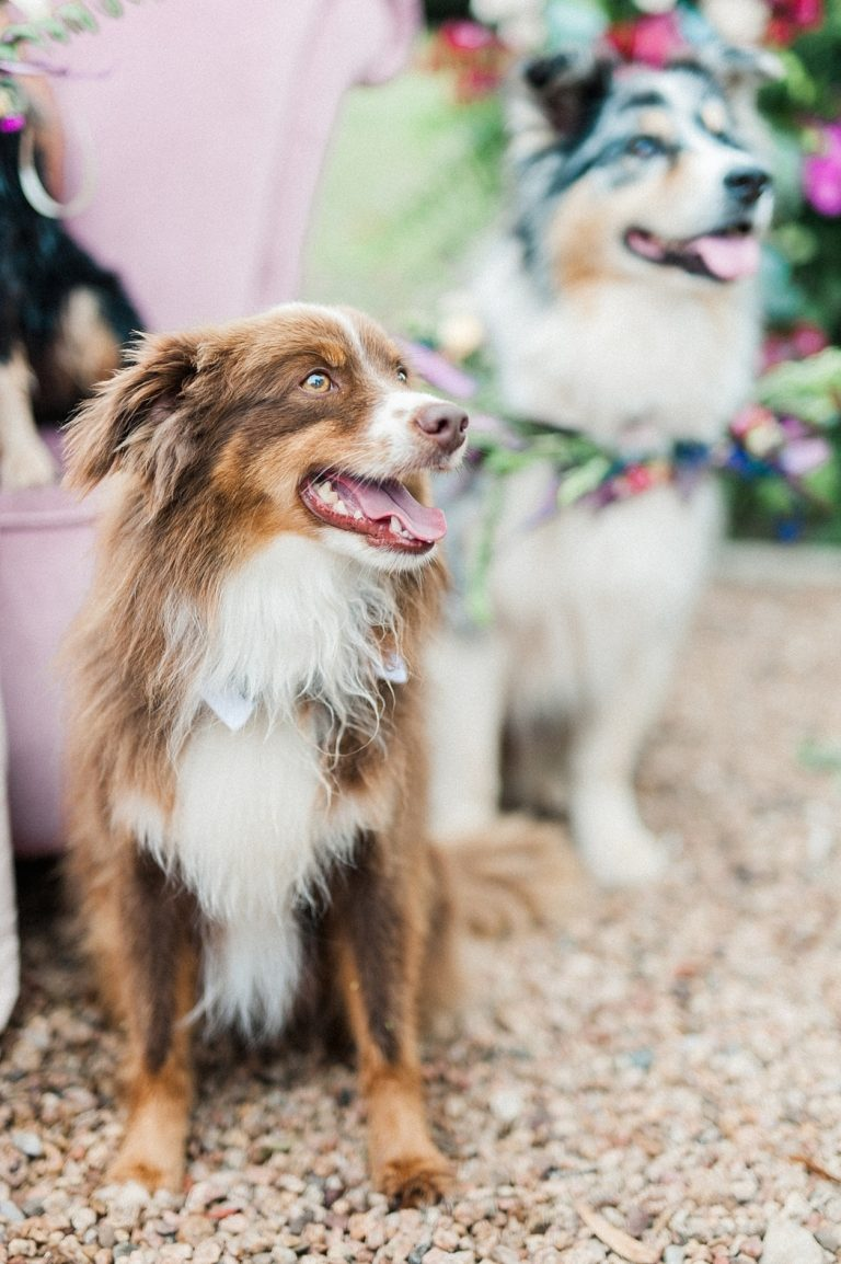 dog wedding attendant