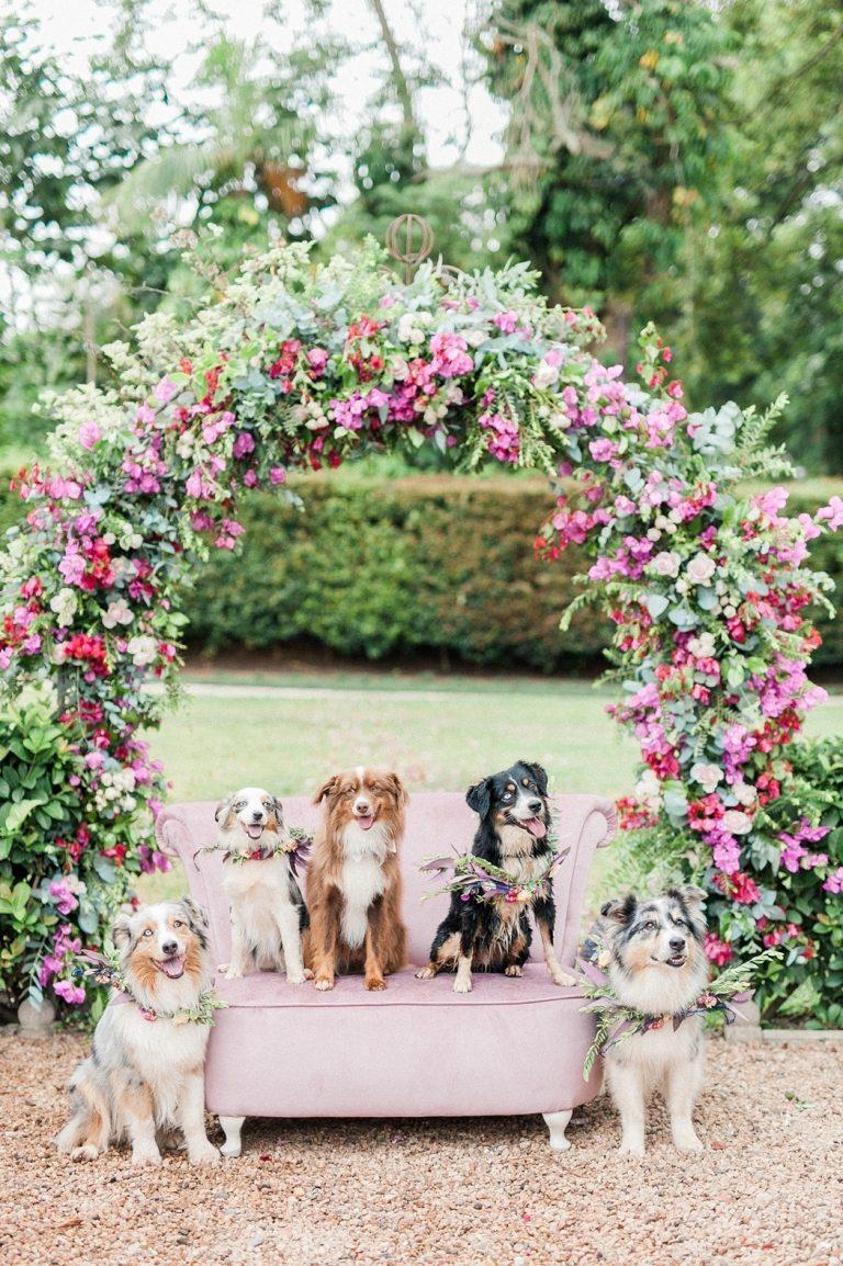 dog bridal party